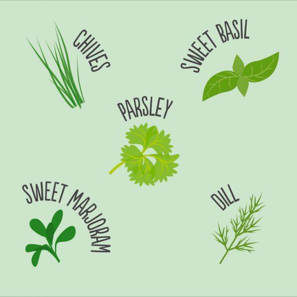 herb mix species