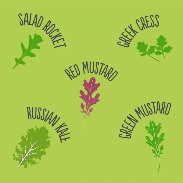 salad species