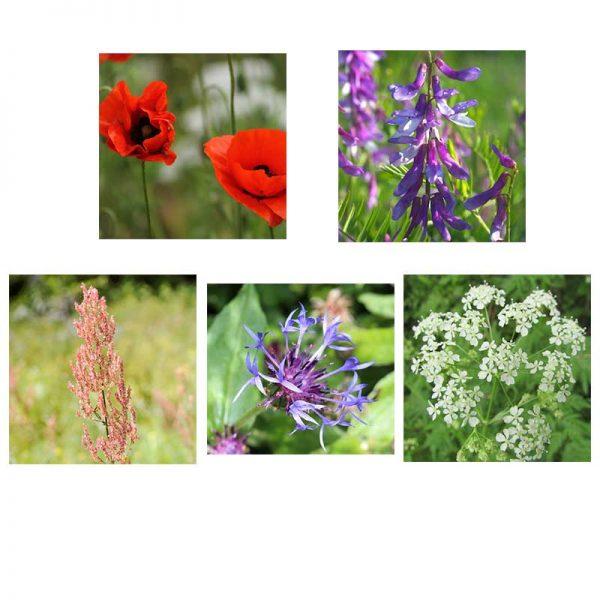 bird-flowers-mix